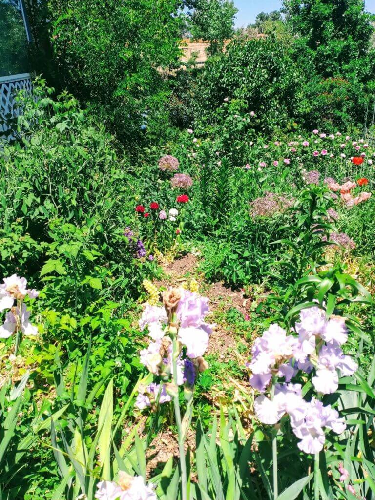 thomas ramey watson garden front